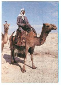 Israel, Bedouin, Camel in the Desert, unused Postcard