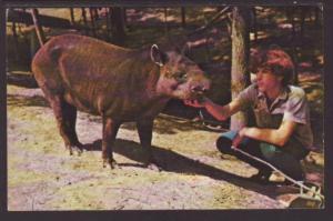 Tapir,Parke County,IN Postcard