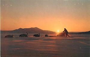 Sled Dogs in the Land of the Midnight Sun Alaska AK