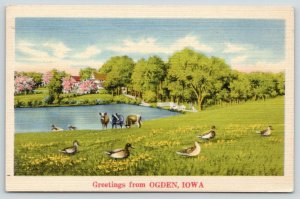 Ogden Iowa~Cows & Ducks in Meadow~Down by Pond~1944 Linen Postcard