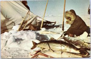 Shee Fishing in Arctic Alaska