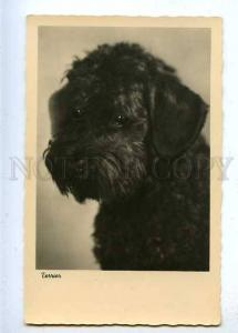 184765 Charming HUNTING Dog TERRIER Vintage PHOTO postcard