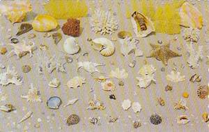 The tropical Caribbean, Collection of shells, coral and other treasures, 40-60s