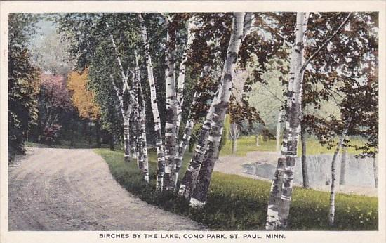 Minnesota Saint Paul Birches By The Lake Como Park