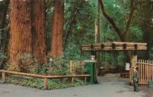 California Santa Cruz County Park Gateway Henry Cowell Redwoods State Park 1956