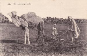 Labourage Arabe , Algeria , 00-10s, Camel