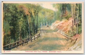 Massachusetts~Mohawk Trail (Hoosac Valley?)~Indian Trade Route~Tall Trees~1920s