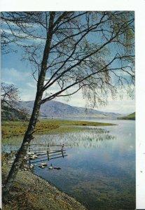Scotland Postcard - St Mary's Loch - Selkirkshire - Ref 17422A