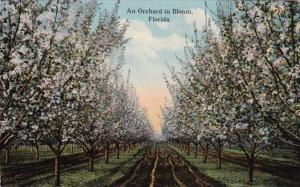 Florida An Orchard In Bloom