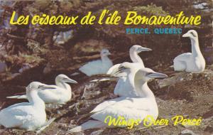 Les oiseaux de l'ile Bonaventure , PERCE , Quebec , Canada , 1957