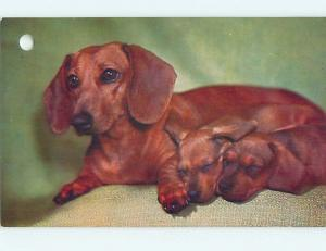Hole Punch Damage Pre-1980 DACHSHUND DOG WITH TWO PUPPIES n0397