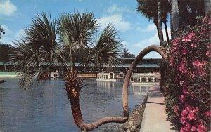 The Lucky Palm Silver Springs, Florida
