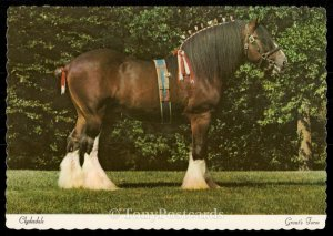 Clydesdale - Grant's Farm