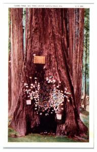 Early 1900s Card Tree, Big Tree Grove, Santa Cruz, CA Postcard