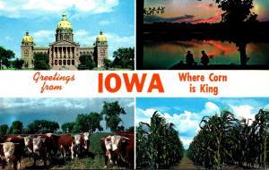 Greetings From Iowa Where Corn Is King