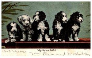 Dog , Rag Tag and Bobtail