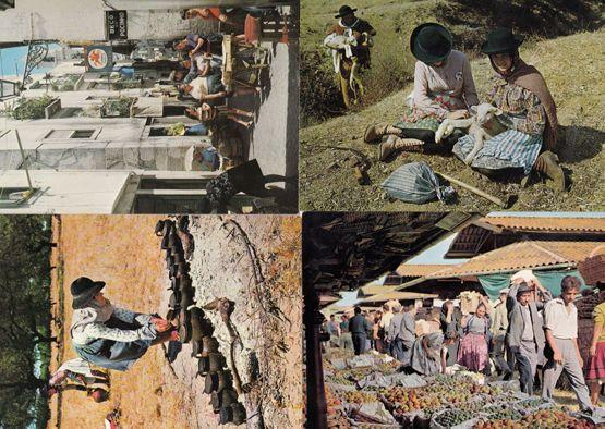 Portugal Street Markets Donkey Tending Pottery Mowers 4x Culture Postcard s