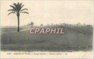 Old Postcard Scenes et Types Landscape Palms Saharan Dalliers