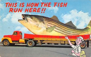 Fishing Postcard Truck with a Huge Fish in the Back Exaggeration Unused