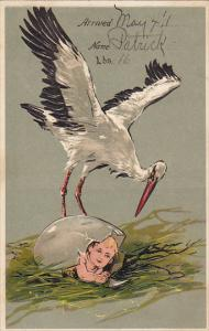 Stork With Baby Coming Out Of Cracked Egg 1911