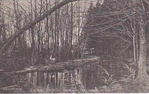 Connecticut Deep River Fern Glen Albertype