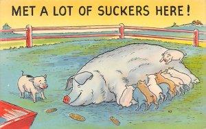 Pig Comic Pig Unused