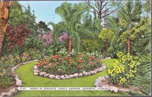 SARASOTA, roses add beauty to Sarasota Jungle Gardens, 1930/40s