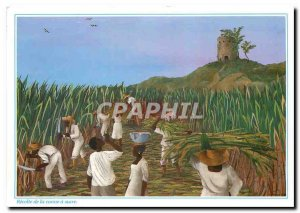 Modern Postcard Images of Harvest Antilles sugarcane