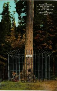 MULLAN TREE FOURTH OF JULY CANYON IDAHO
