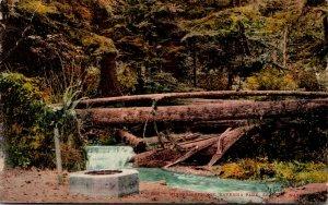 Washington Seattle Ravenna Park Mineral Springs 1910