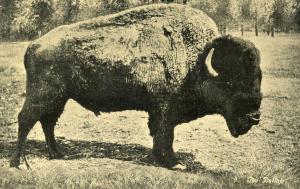 Ezra Meeker. Buffalo
