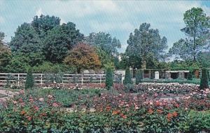 Rose Garden Saint Louis Missouri