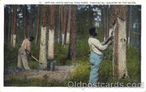 Turpentine Industry Black Blacks Postcard Post Card  Turpentine Industry