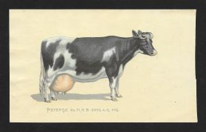 VICTORIAN TRADE CARD Pain-Killer Cow Statistics Pietertje