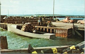 Lobster Season NB New Brunswick Fishermen Fishing Unused Vintage Postcard F30