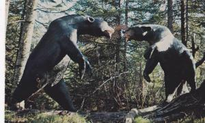 Fighting Bears of ANIMALAND , Sussex , New Brunswick , Canada , 1988