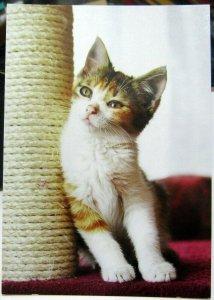 Postcard Cat Kitten Scratching post - unposted