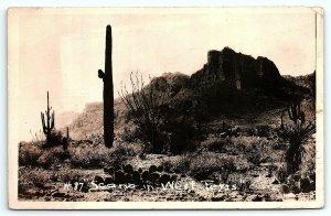 VTG Postcard RPPC Real Photo Desert Scene West Texas TX Cactus Range Valley A9
