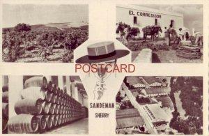 SANDEMAN SHERRY - SPAIN - RPPC four views of SANDEMAN VINEYARDS & BODEGAS