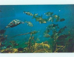 Pre-1980 SILVER SPRINGS SCENE Ocala Florida FL AF9789@