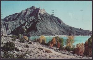 Cedar Mountain,Yellowstone Postcard BIN