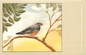 South african quail finch quail bird postcard
