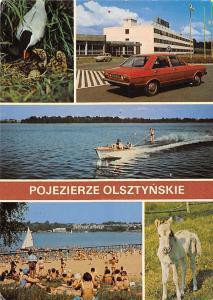 Poland Pojezierze Olsztynskie, Rybitwa zwyczajna (Sterna hirundo)