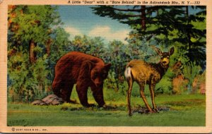 Bears A Little Dear With A Bare Behind In The Adirondack Mountains New York C...