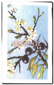 Image Entremets Francorusse sloe or black Thorn