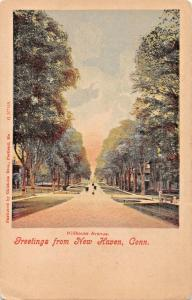 NEW HAVEN CT~HILLHOUSE AVENUE-CHISHOLM BROS PUBL GREETINGS FROM POSTCARD 1900s