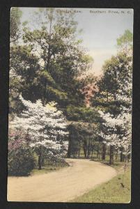 Path View Hedge Row Southern Pines North Carolina Unused c1930s