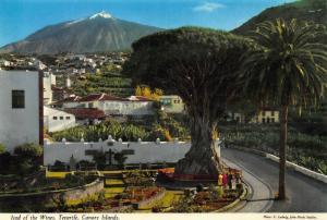 Spain Canary Islands Icod of the Wines Tenerife Postcard