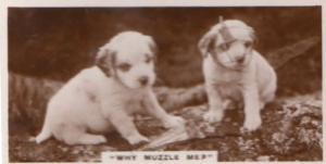 Why Muzzle Me Dog Puppy Real Photo Dogs Antique Cigarette Card