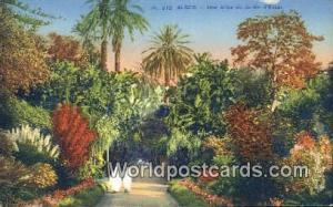 Alger Algeria, Africa, Une Allee du Jardin d'Essai  Une Allee du Jardin d'Essai